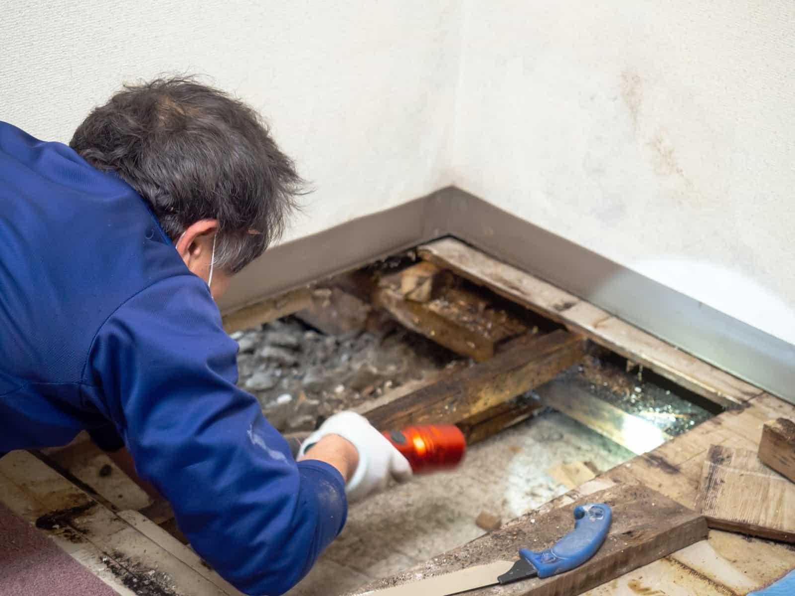 mold under the floor